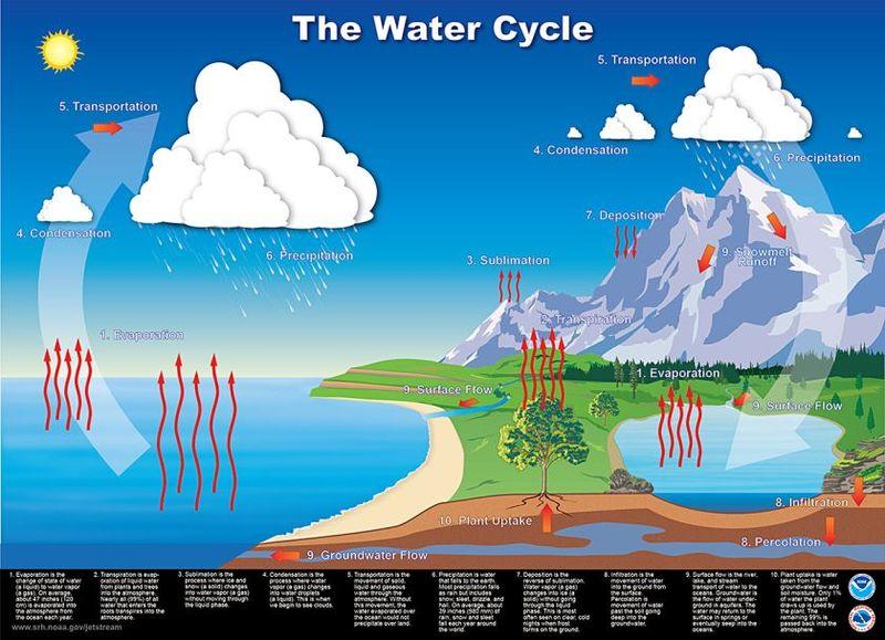 Wasserverbrauch: 15.000 Liter Wasser für 1 Kilogramm Rindfleisch?